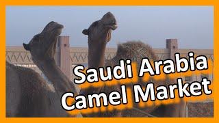 Download Saudi Arabia - Riyadh Camel Market Video