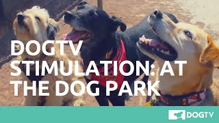 Download DOGTV STIMULATION: THE DOG PARK Video