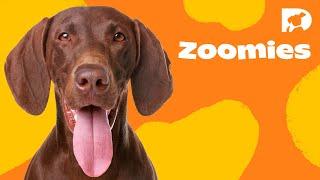 Download DOGTV STIMULATION: THE DOG PARK Video