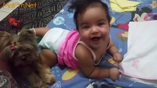 Download Dogs Protecting Babies Kids - Loyal Dog Doesn't Allow Anything Danger to the Owner Video