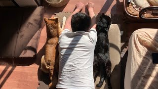 Download 光合成中の3匹が可愛すぎて興奮した Basking in the sun with dog and cat Video