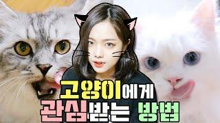 Download 고양이에게 관심받는 방법!! [feat.쵸파,루피]♥혜서니♥ Video