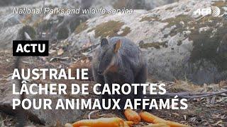 Download Australie: les sauveteurs larguent des légumes par les airs   AFP News Video
