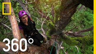 Download 360° Climbing Giants | National Geographic Video