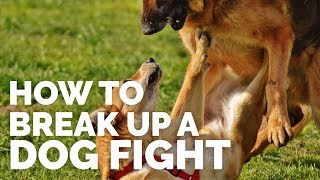 Download How to Break up a Dog Fight Video