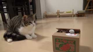 Download ポチっと押したら猫が出る!? Cat piggy bank and Amie Video