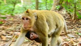 Download Mother Monkey Beats Her Baby Very Hard Video