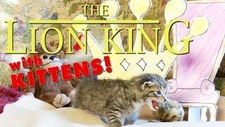 Download The Lion King (Cute Kitten Version) Video