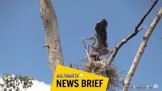 Download Big beautiful birds Video