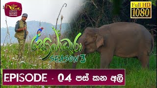 Download Sobadhara - Sri Lanka Wildlife Documentary | 2019-03-22 | Elephant in Sri Lanka Video