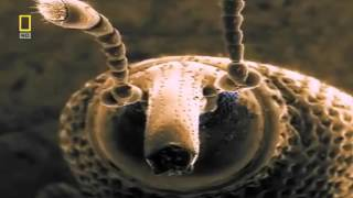 Download Чудесный Мир насекомых Документальный фильм National Geographic Наши невидимые спутники Video