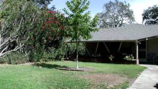 Download Growing Tree. 5 year timelapse from my backyard. Video