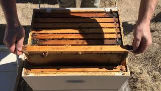 Download Hive Inspection Part 2: How to Find the Queen (Systematically)! Video