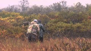 Download SCI #1 ARCHERY BROWN BEAR AT 5 YDS. Video