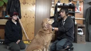 Download なぜ飼い犬が人を殺傷する事件が起きたのか説明したい!! Video