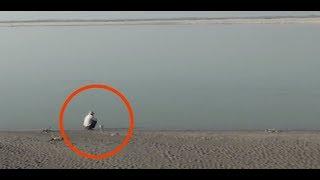Download Il 16enne seppellisce qualcosa nel deserto. 37 anni dopo, quel luogo è irriconoscibile. Video