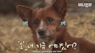 Download The dog in love with a cow..is forced to break up by its owner.. Video
