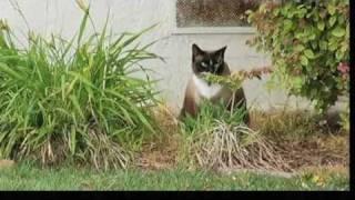 Download Dusty the Cat Burglar Video