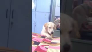 Download Delhi most expensive dog thunder Video