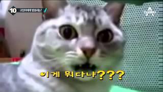 Download 발 냄새 맡은 고양이, 충격 받아 '깜짝' 채널A 뉴스TOP10 Video