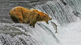 Download Katmai National Park Video