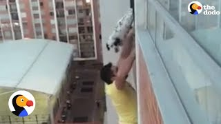 Download Dog Dangling from Balcony Rescued by Heroic Man | The Dodo Video