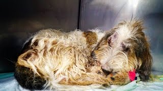Download Amazing recovery of a dog thrown out of a speeding car Video