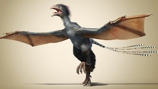 Download A new dinosaur: Flying without feathers Video