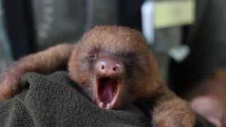 Download ANIMALS SCREAM YAWNS Video