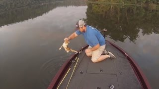 Download Watch a Fisherman Catch and Rescue Two Kittens Swimming in River Video