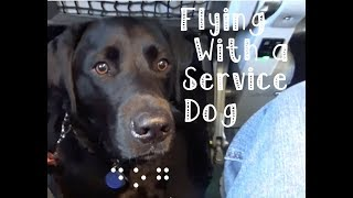 Download Air Travel with a Guide Dog : How Does a Guide Dog Fly? Video