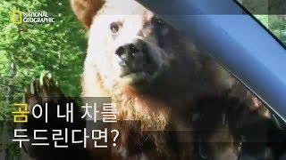 Download 곰의 잔칫상이 돼버린 도로 Video