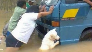 Download UNBELIEVABLE and UNEXPECTED MOMENTS with FUNNY ANIMALS! Video
