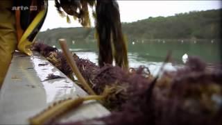 Download 2014 Faire du plastique à partir d'algues Video