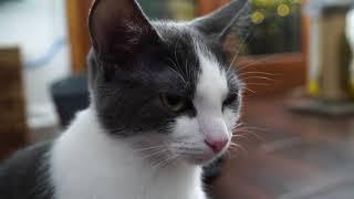 Download Kitten Close Up 2017-12-08 Video