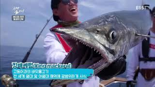 Download 성난 물고기 - 바다의 치타, 돛새치 2부 #001 Video