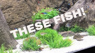 Download WHY THIS FISH TANK AND THESE FISH! Video