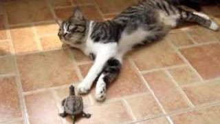 Download my cat and turtle Video