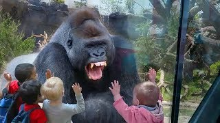 Download Quand les animaux du Zoo attaquent les humains Video