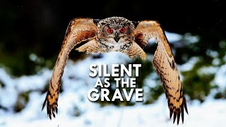 Download Owls are Dead Silent Flyers Video