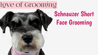 Download How to Clip a Pet Schnauzers Face and Eyebrows Short   Pet Schnauzer Grooming Video