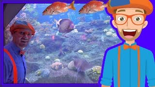 Download Animals for Children with Blippi | The Sting Ray and Fish! Video
