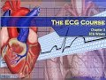 Download The ECG Course - Waves & Complexes Video