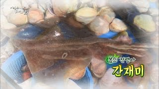 Download 잃어버린 입맛 살린다는 바다의 터줏대감! 간재미 Video