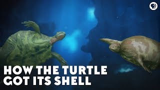 Download How the Turtle Got Its Shell Video