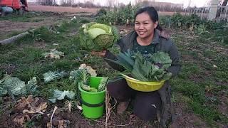 Download เข้าสวนเก็บผักวิถีการใช้ชีวิตคนไทยในต่างแดนมีฮอดผักลืมผัว Video