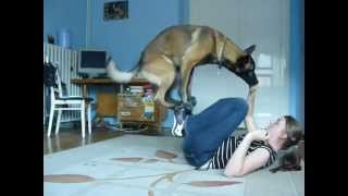 Download Malinois trick show II. Video