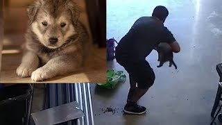 Download Man caught on camera a stealing a puppy Video