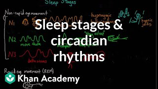 Download Sleep stages and circadian rhythms | Processing the Environment | MCAT | Khan Academy Video