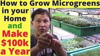 Download How to Grow Microgreens in Your Home & Make $100,000+ a Year Video